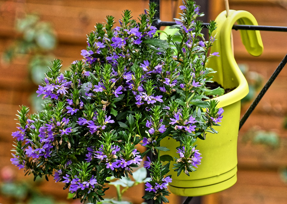 zavěšený kvěináč s rostlinou